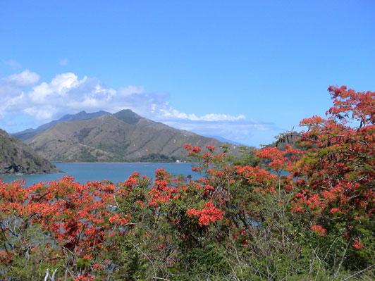 Bild: Mont Panié